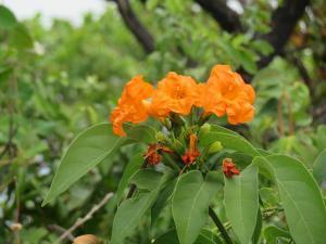 Flora da serra