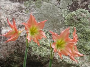 Flora da serra2